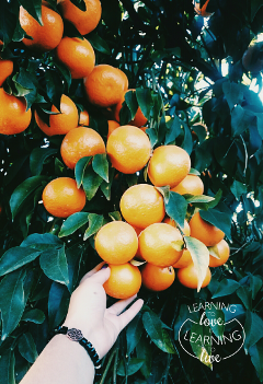 freetoedit photography fruits orange green