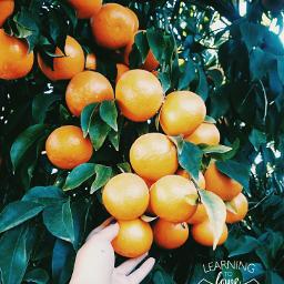 freetoedit photography fruits orange green