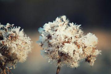 winter frozen frostymorning nature freetoedit