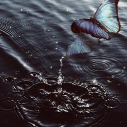 freetoedit interesting remix remixed butterfly