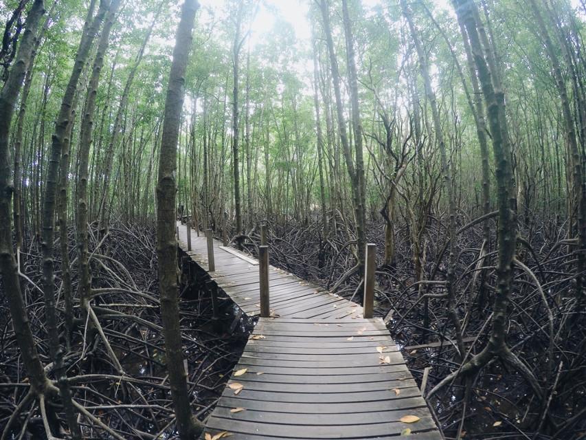#FreeToEdit #interesting #art #nature #travel #photography #traveling #naturephotography #trees #thailand #relax #gopro #goprohero4 #bridge #woodenbridge #ways