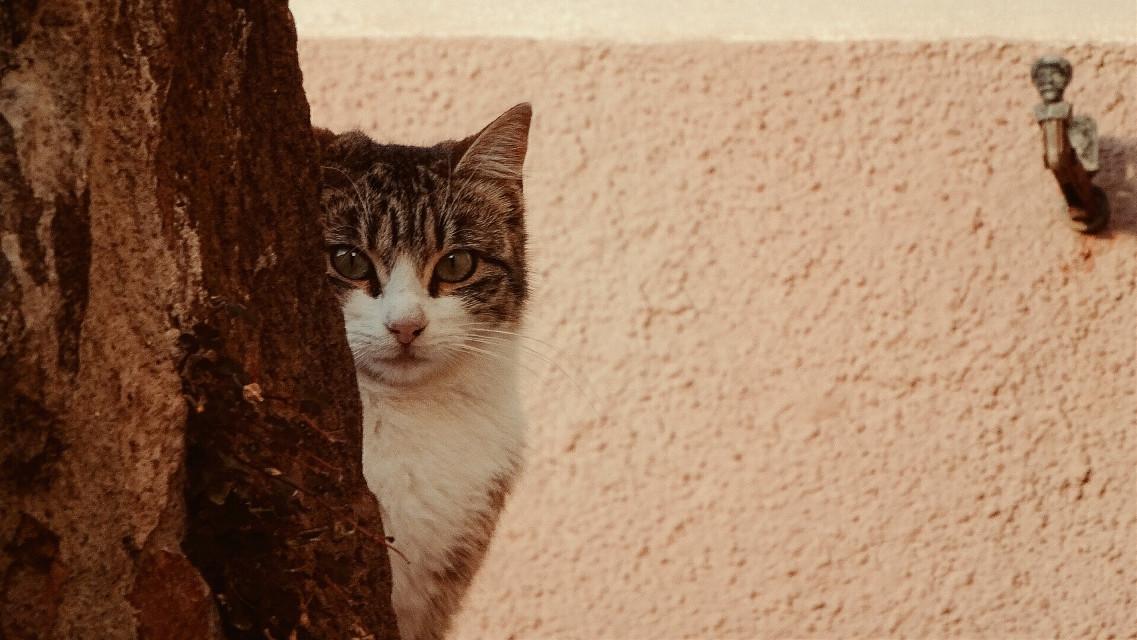 Cucù!!!!!!  #pctwohues #twohues #bosa #SaCosta #sardegna #italy #cat #petsandanimals #emotions #retro  #photography #dpcpets   #FreeToEdit