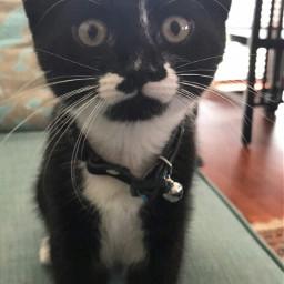 freetoedit tuxedo