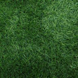 freetoedit green grass background texture