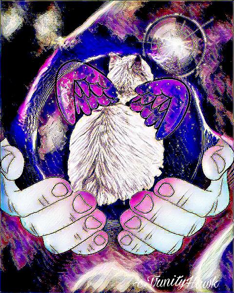 remix remixed remixedwithpicsart cat cosmic