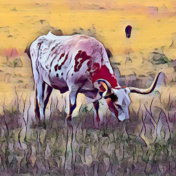 freetoedit texaslonghorns hookemhorns cattle photography