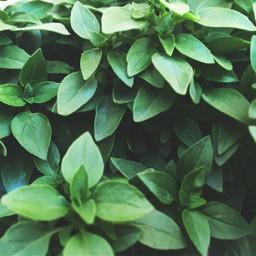 freetoedit texture green