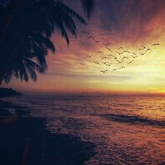 beach silhouettes nature photography picsart