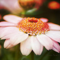 photography photo nature flower flowers