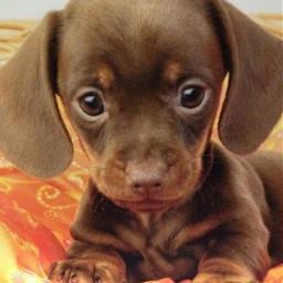 baby dog freetoedit