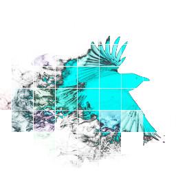 hd hdr beautiful blue bird freetoedit