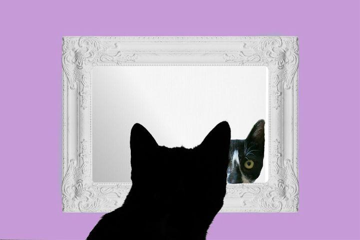 freetoedit petsandanimals mypet cute catsofpicsart