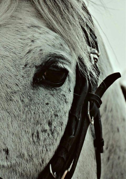 petsandanimals horse eyes hair beautiful freetoedit