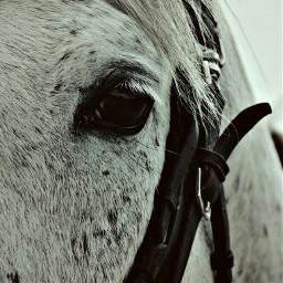petsandanimals horse eyes hairs beautiful dpcanimaleyes freetoedit