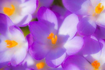 flower spring naturephotography freetoedit