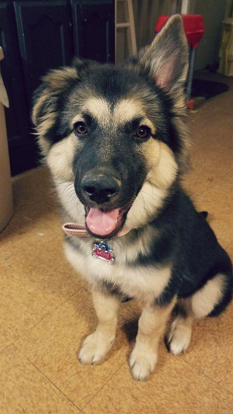 puppyday petsandanimals