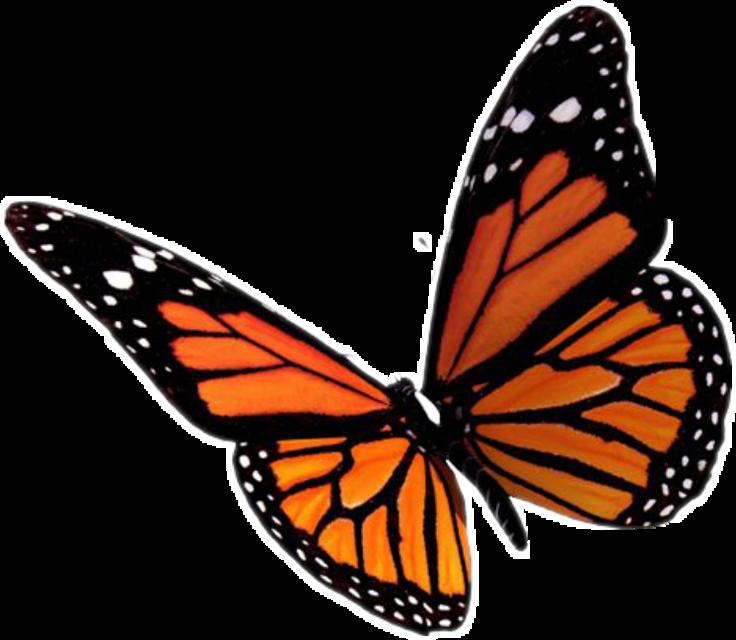 #butterflystickers