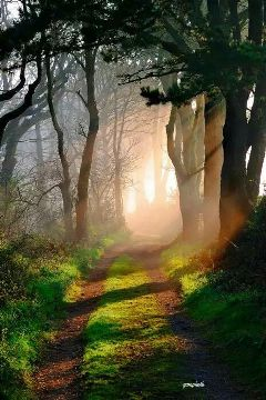 forest morning fog natural photography