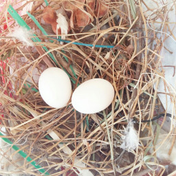 freetoedit nesting birds at my