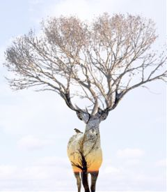 doubleexposure editing tree birds surreality